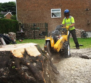 Stump-Removal-Newcastle