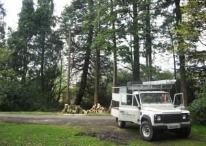 Tree Felling In Northumberland