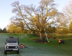 veteran tree management whickham